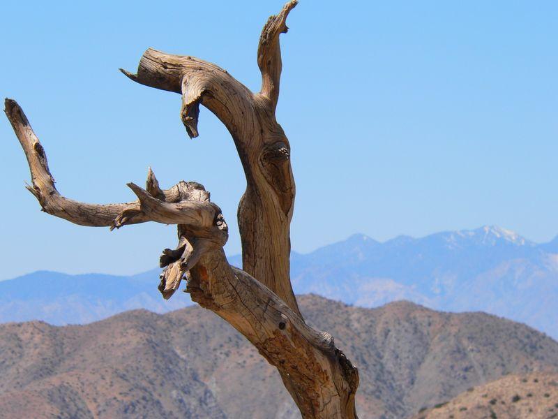 Joshua Tree 0309 - 119